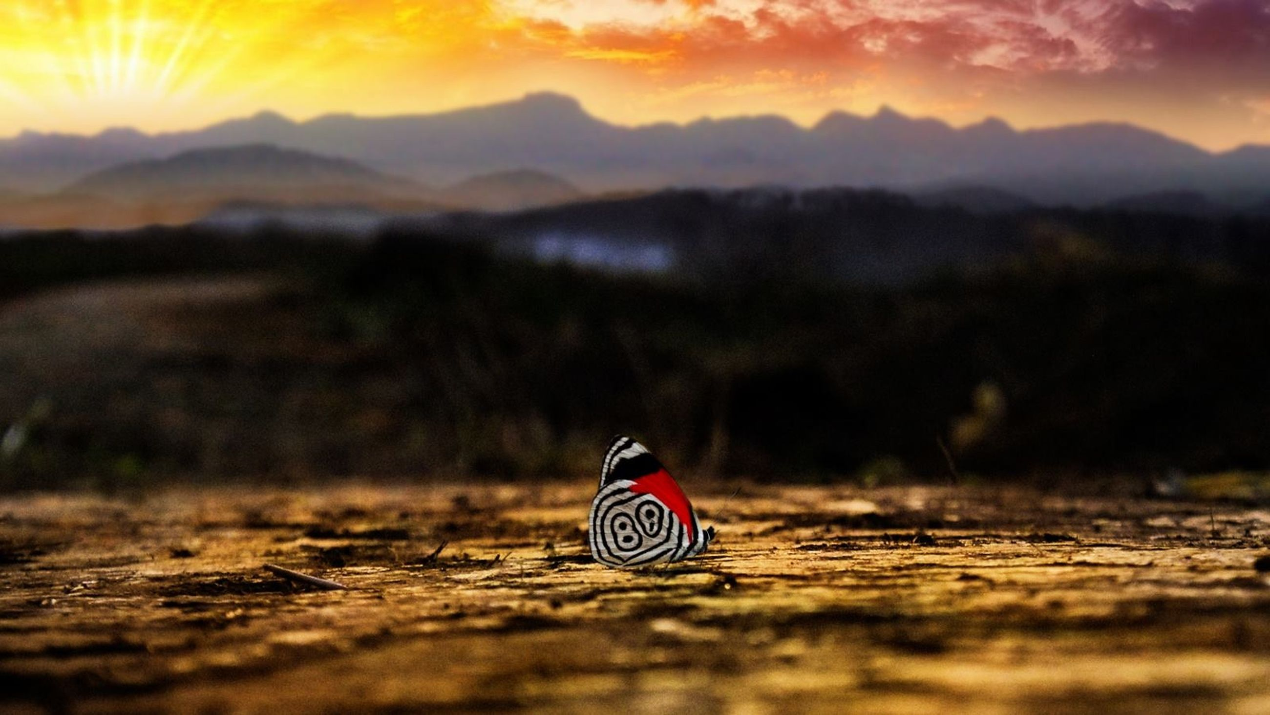 sunset, orange color, red, selective focus, sky, tranquility, mountain, landscape, focus on foreground, tranquil scene, nature, scenics, beauty in nature, outdoors, no people, surface level, close-up, communication, cloud - sky, non-urban scene