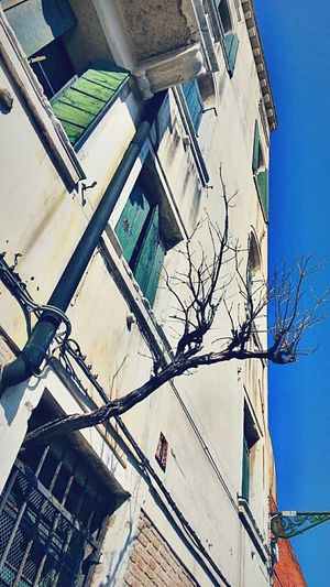 Branches through the window Branches Branches No Leaves Branches Of Trees Building Wall Windows Low Angle View The Street Photographer - 2016 EyeEm Awards Street Photography Street Mycapture The Beauty Of Nature Through The Window Street Photo Texture And Color Paris In Spring Time Travelgram Travel Photography MyCommute Fresh On Eyeem