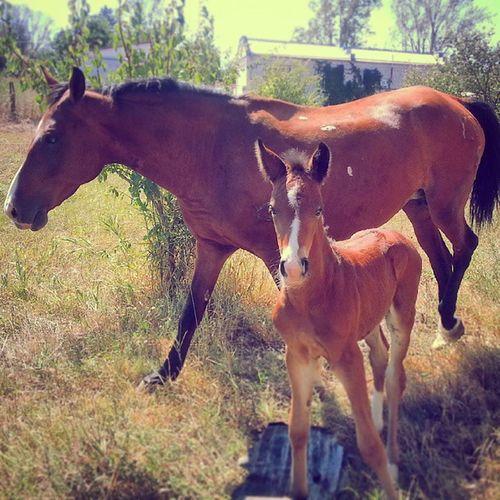 Выйду ночью в поле с конем..?? // Хьэпыштэ Амин и шы ! Шагъдий конь Кони лошадь