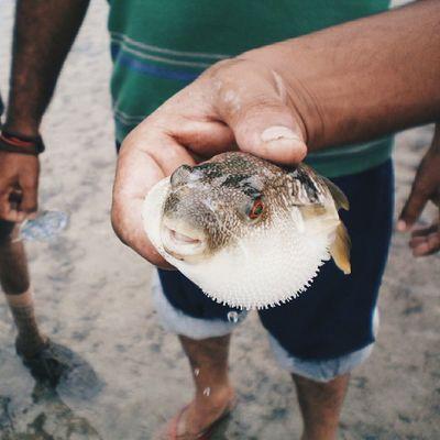 Puffer Fish Jamnagar Gujarat Ig_gujarat @1000things2doingujarat VSCO Vscocam Cam Fish Sea