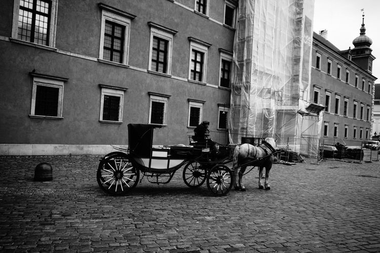 Horse cart on street amidst buildings in city