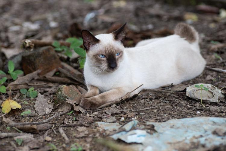 Portrait of cat lying on land