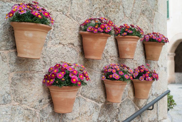 Flower pots at