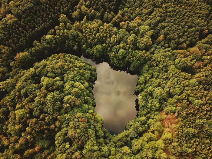 Water Lake Aerial Shot Green Color Growth Plant Beauty In Nature Tree No People High Angle View Nature Day Tranquility Land Scenics - Nature Full Frame Outdoors Aerial View Tranquil Scene Non-urban Scene