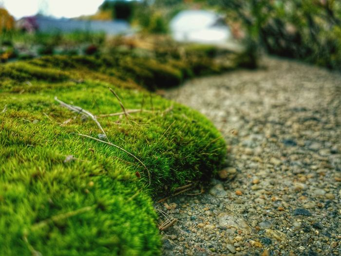 Taking Photos Perspective Photography Nature_collection EyeEm Nature Lover Windypath Stones Moss Lakeside Adventures Hikingadventures