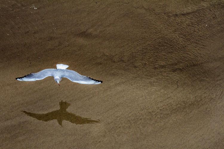 High Angle View Of Bird Flying Over Sand