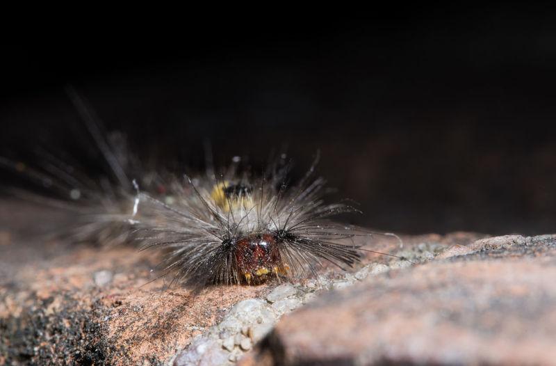 Macro shot of spiked caterpillar on stone