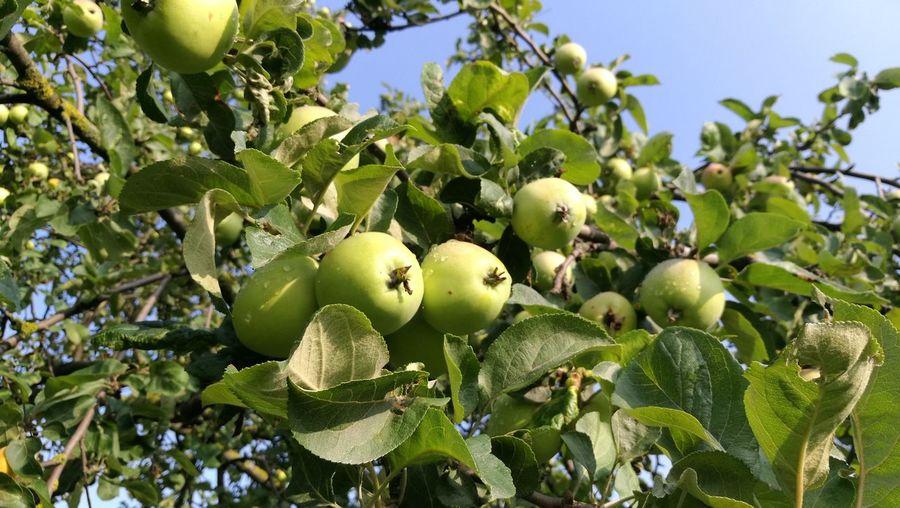 Showcase July Apple Green