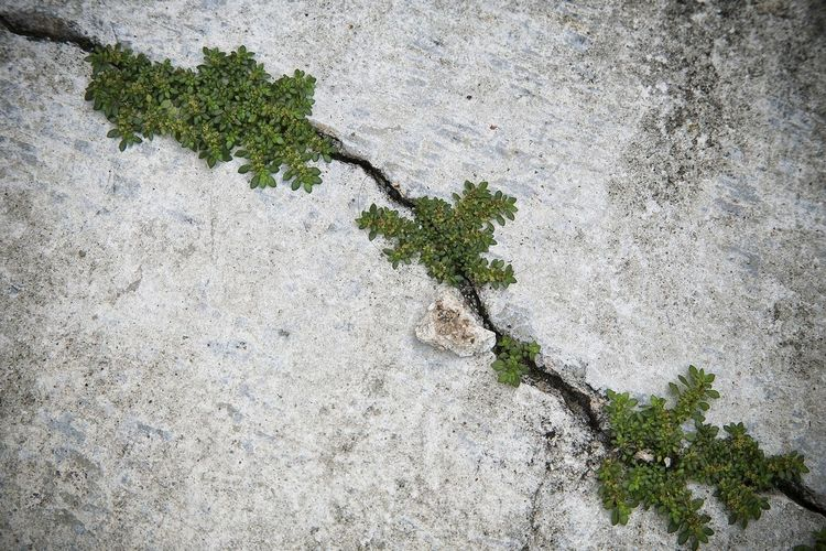 Close-Up Of Plants Developed In Cracked Concrete Wall