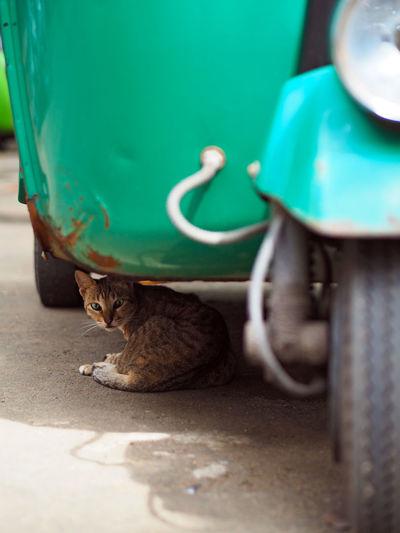 Cat sitting under rickshaw parked at street