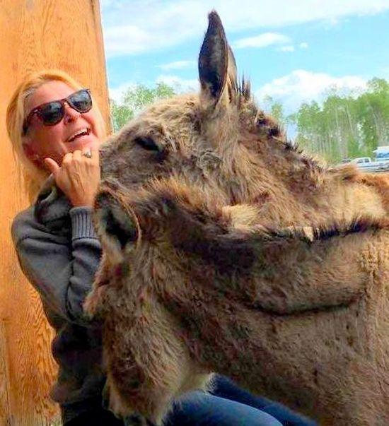 Donkeys Furry Friends Joy Laughter Ranch Life Ray Ban Wayfarers Tetons Wyoming Tripod Photography Love Yourself