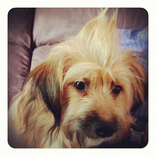 Punk dog Dog Pet Iphonesia Iphonography Ink361 Discovertalent Igdogs