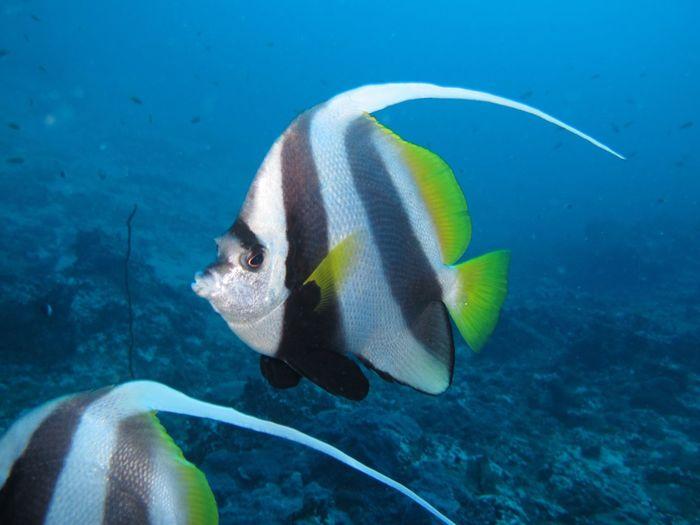 EyeEm Selects Sea Underwater Fish Water Animals In The Wild Animal Wildlife UnderSea Vertebrate Sea Life Swimming Marine Coral Nature Group Of Animals No People