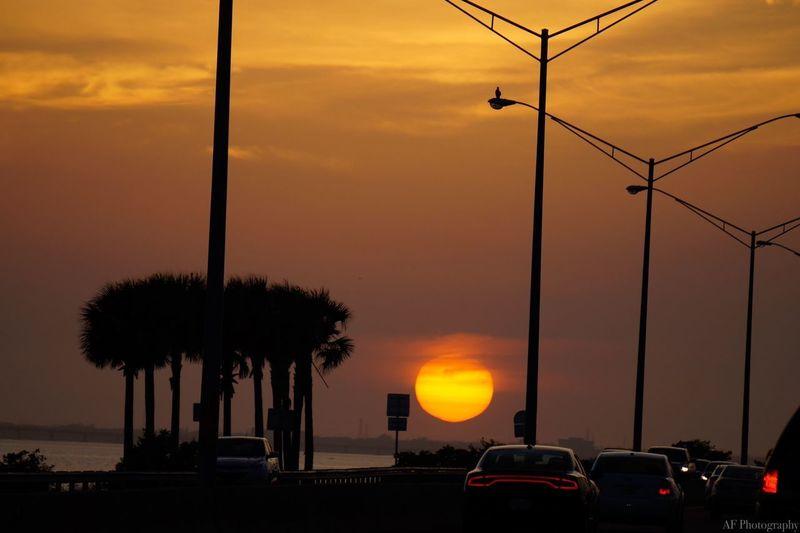 Sun Drop Rush Hour Bird Clearwater Florida Car Sunset Land Vehicle Orange Color Sky Street Light Outdoors Silhouette Beauty In Nature Cloud - Sky