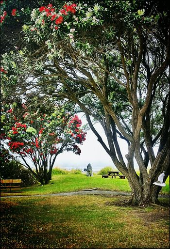 Window to the sea EyeEm Nature Lover Natural Frame Pohutukawa Tree_collection