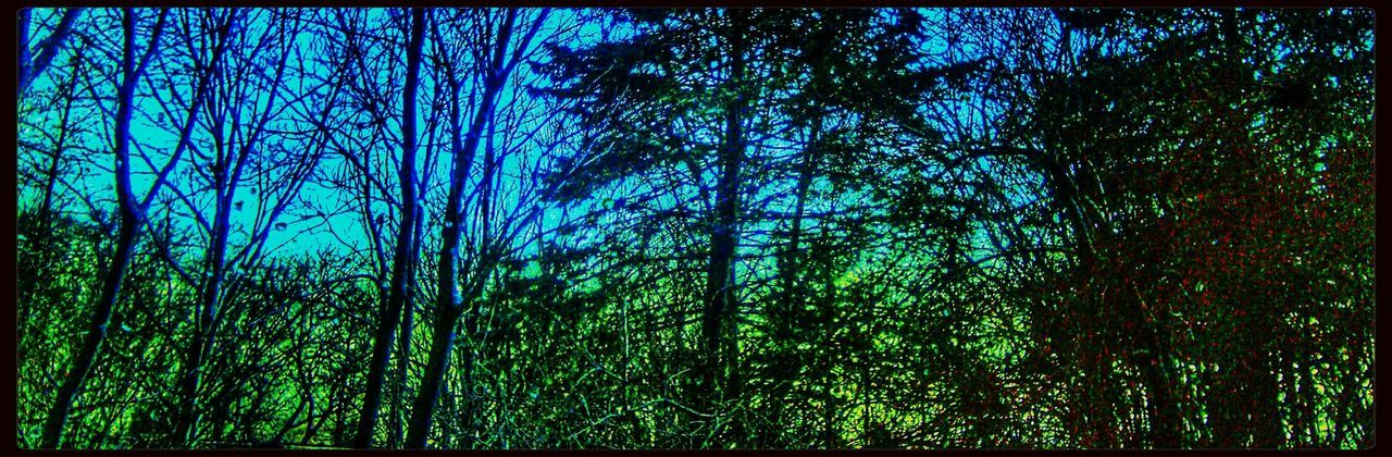 Passing through Green and Blue. Colors And Textures Of Nature Trees Snapseed Hdr_Collection