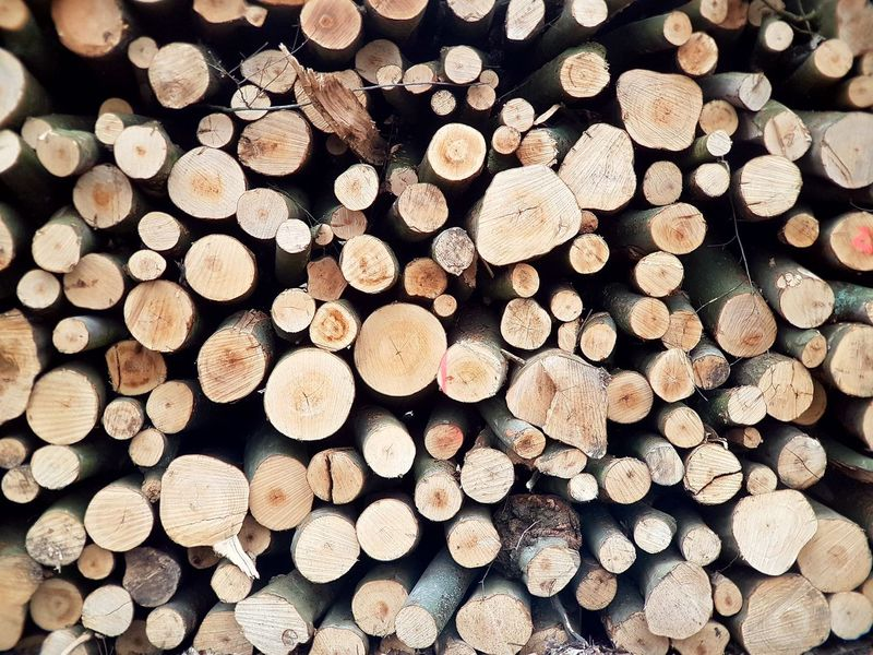 Woodpile Forestry Industry Backgrounds Wood Pattern Environmental Issues Wood - Material Forest Photography Texture Surfaces And Textures Environment Forest Trees Forest Material World Tree Stump Tree Porn Trees And Nature Nature Collection Wood In Nature Wood Industry Wooden Background Wood Background Tree Cover