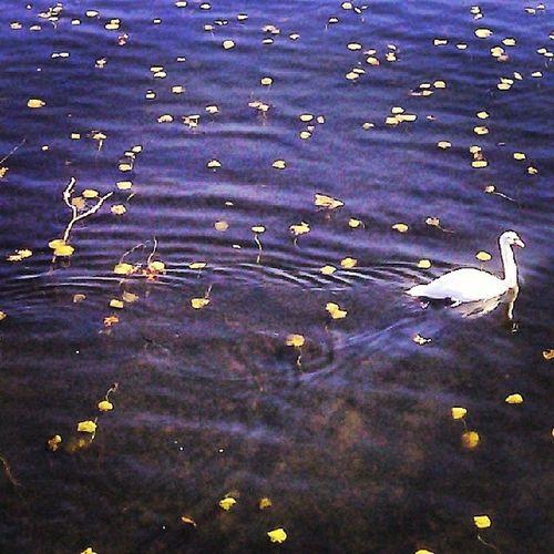Swan MysticRiver Lovethatdirtywater Medford