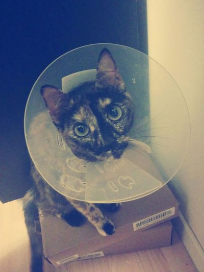 Cat Gato Chat Beauty :c