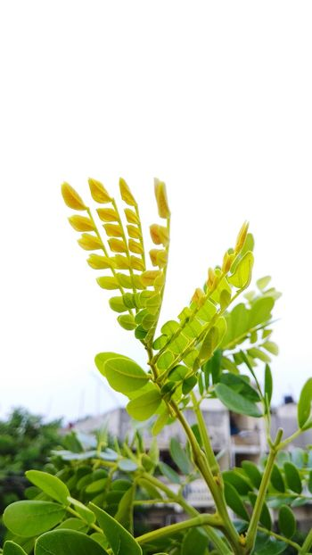 Plant Leaf Green Color Insect Nature No People Uncultivated EyeEm Ready   EyeEmNewHere