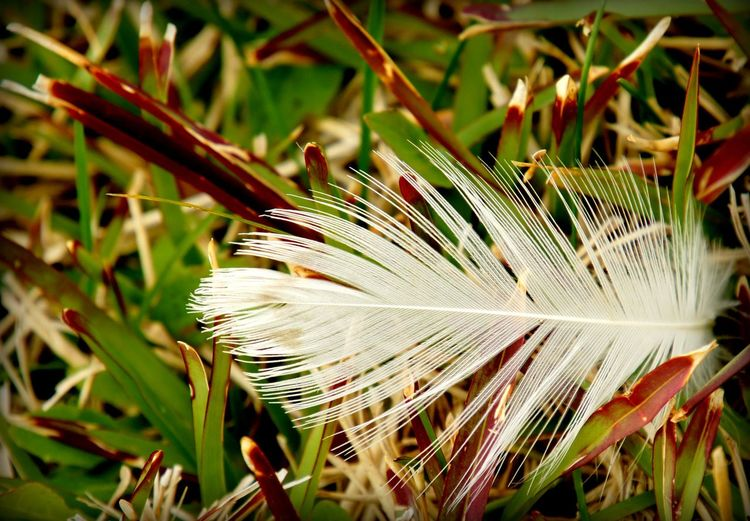 Close-up of feather on plant