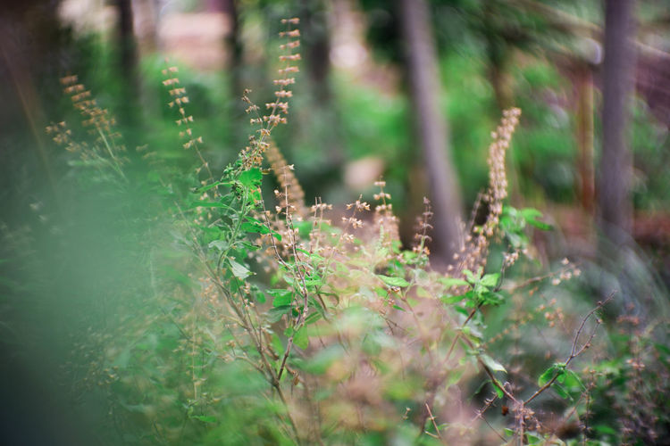 Land Day No People Beauty In Nature Outdoors Tranquility Nature Green Color Freshness Plant Part Forest Close-up Field Plant Growth Selective Focus Tree Leaf Fragility Vulnerability  EyeEmNewHere EyeEm Best Shots EyeEm Nature Lover