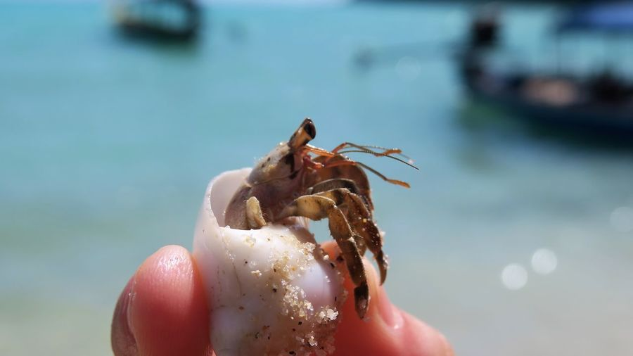 Cropped hand of person holding crab