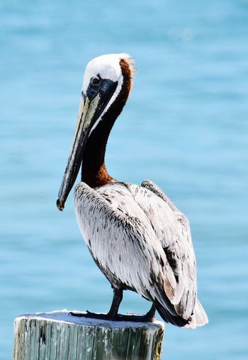 EyeEm Selects Bird Animals In The Wild One Animal Animal Themes Animal Wildlife Day Beak Focus On Foreground Perching Nature Close-up Outdoors Lake Water No People Pelican Beauty In Nature