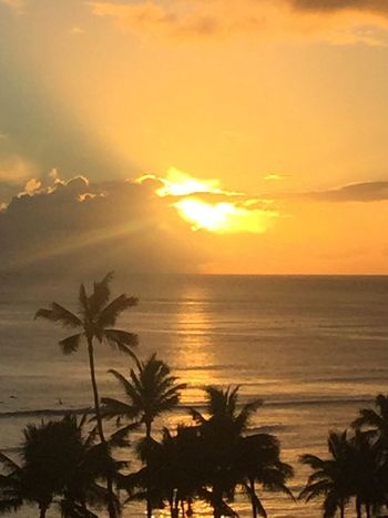 Pacific Ocean Sky Pacific Ocean View Pacific Sunset Sunset Sun Oahu, Hawaii Palm Tree Silhouette Orange Color Beach No People Horizon Over Water Sunlight Water No Edit/no Filter Island Of Oahu, Hawaii Perspectives On Nature Oahu Oahu Hawaii Oahu Sunset Oahu / Hawaii An Eye For Travel