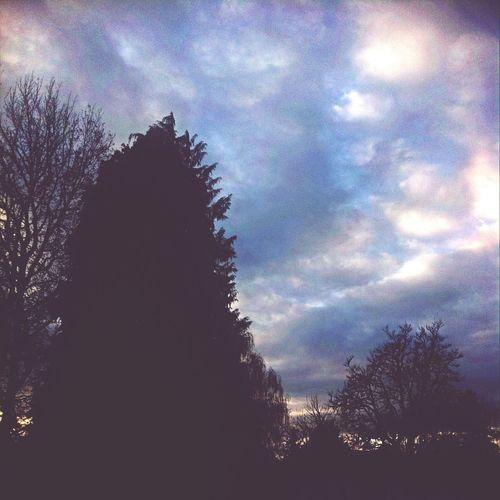 tree n sky First Eyeem Photo