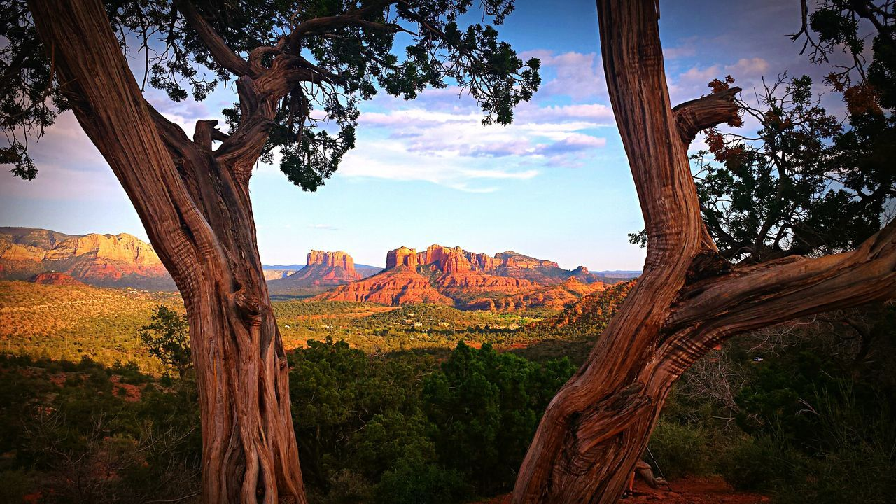 Trees Against Red Rock Canyon National Conservation Area