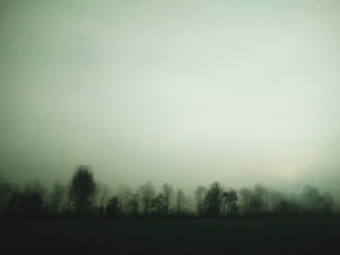 Tree Fog Field Rural Scene Forest Sky Landscape Grass Foggy Hazy  Bare Tree Cold Lone Mist Weather Condition Weather Plough