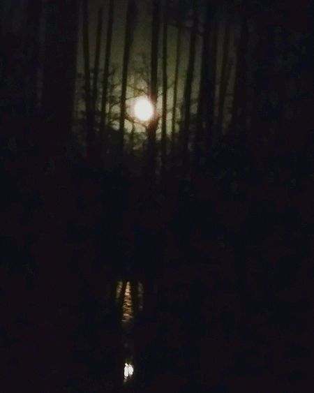 Full Moon Cypress Trees  Ocheesee Pond