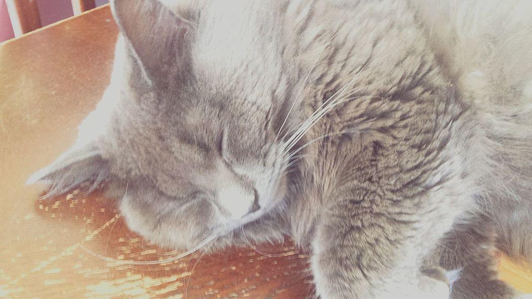 Relaxing Sunshine ☀ Sleeping Sunny Day 🐱 My Beautiful Cat ☺❤ Cat😻