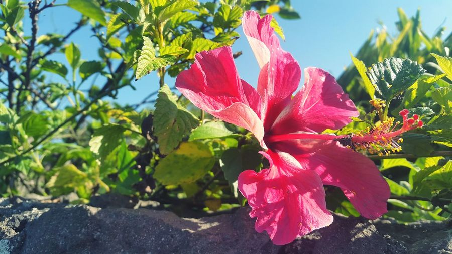 Nature Growth Flower Beauty In Nature Plant Leaf Sunlight Close-up Sky Outdoors Day No People Fragility Flower Head Tree Water Freshness Pink Color Pink