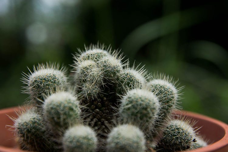 cactus EyeEm Selects Flower Cactus Spiked Desert Thorn Danger Uncultivated Close-up Plant Green Color Sharp Razor Wire Aloe Vera Plant Pencil Shavings Barbed Wire Thistle Spiky Barrel Cactus Blade Succulent Plant Needle - Plant Part Dandelion Plant Life Prickly Pear Cactus