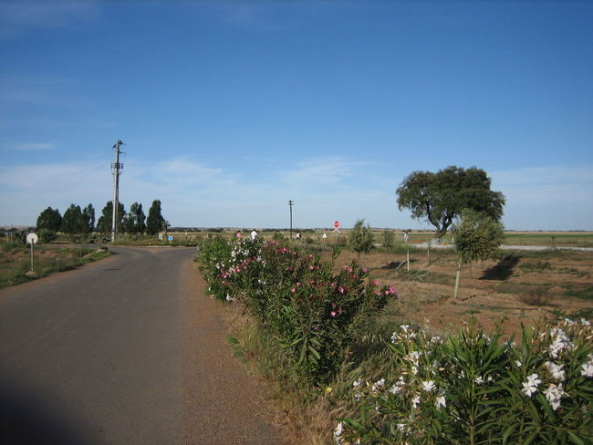 Beja 2006 Beauty In Nature Day Flower Growth Land Vehicle Nature No People Outdoors Plant Road Sky The Way Forward Transportation Tree