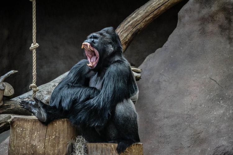 Monkey sitting on wood in zoo