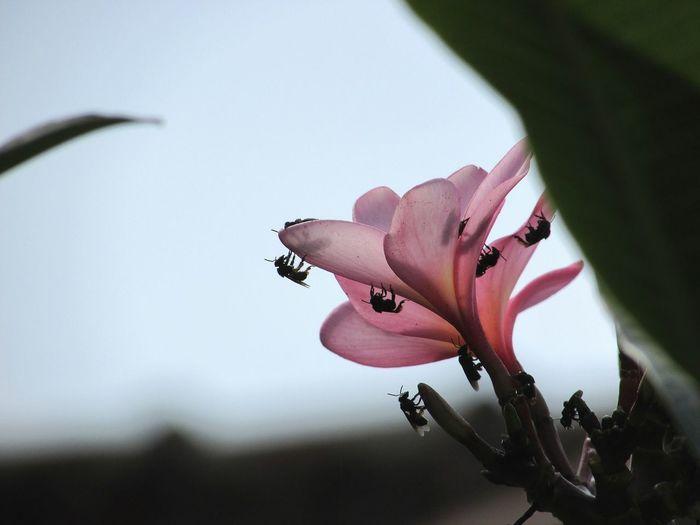 Flower Beautiful Pink