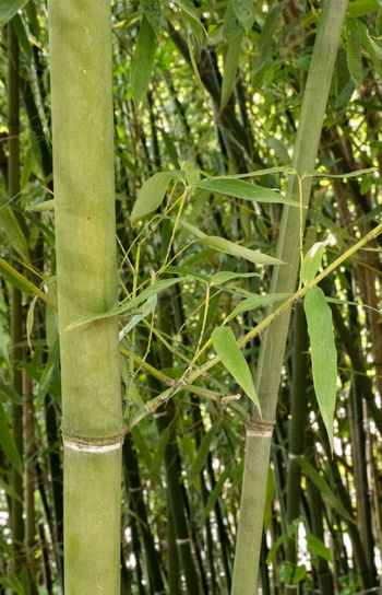 Bamboo Green Zürich Bamboo Bamboo - Plant Bamboo Grove Beauty In Nature Blade Of Grass Close-up Day Field Focus On Foreground Full Frame Green Color Growth Land Leaf Nature No People Plant Plant Part Switzerland Tree