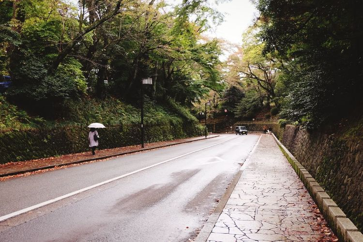 Candid Candid Photography Fall Beauty Fall Umbrella Rain Kanazawa Japan Travel Destinations Travel Road Sign Street Sky Empty Road Treelined Pathway Walkway