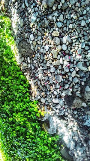 Snake habitat Beauty In Nature Beauty In Rocks