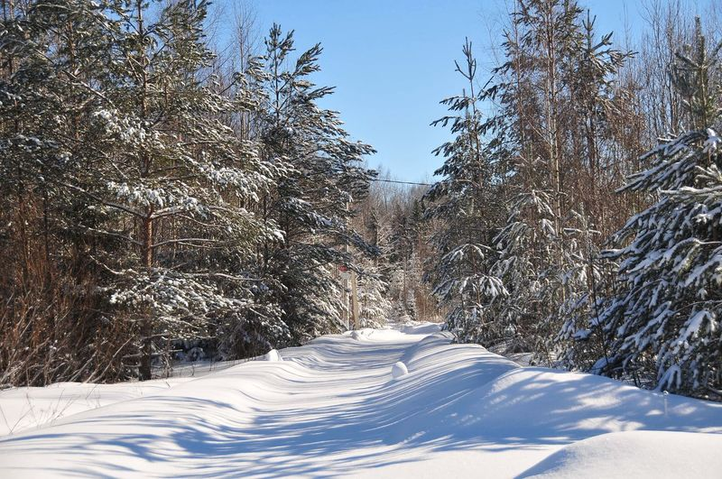 March Winter Wintertime Track Forest Track Road Forest Road Snow Tree Cold Temperature Winter Sky Pine Woodland Evergreen Tree WoodLand Forest