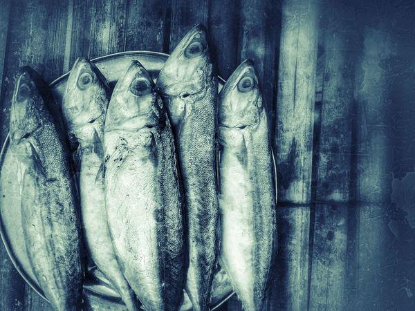 Fish Mackerel Mackerel Fish