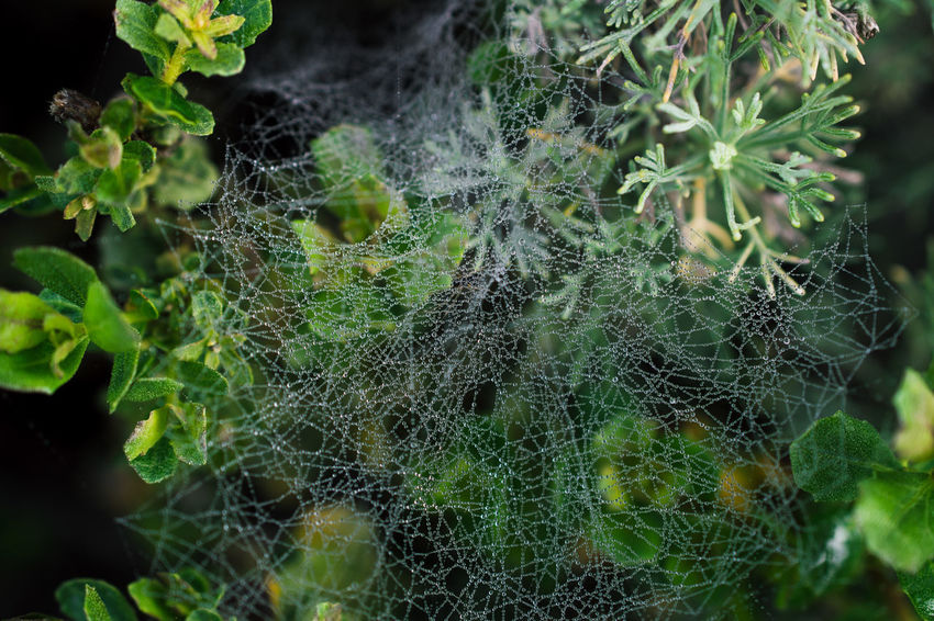 Beauty In Nature Close-up Complexity Day Focus On Foreground Fragility Green Color Growth Nature Outdoors Plant Spider Web Web