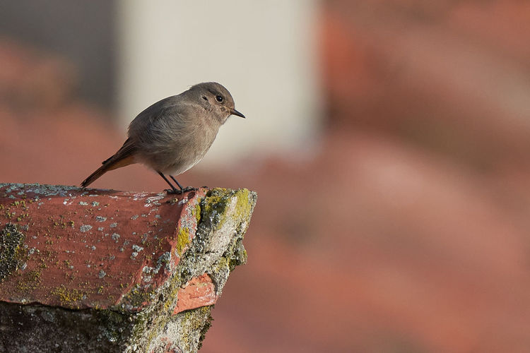 Close-up of bird perching on a wall