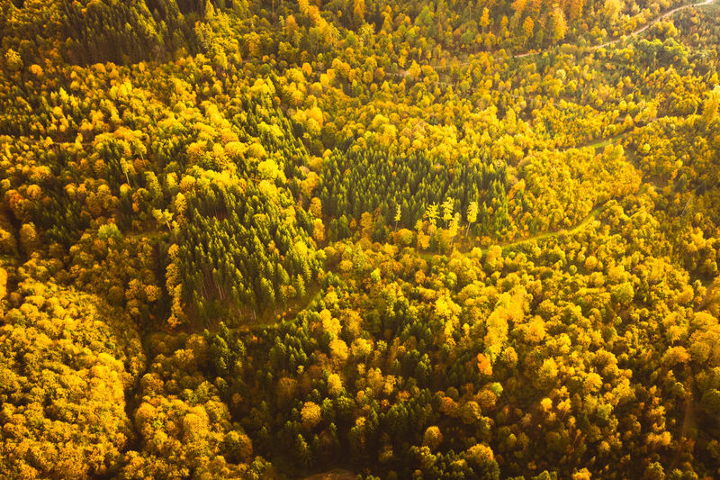 High angle view of yellow flowering plants in forest