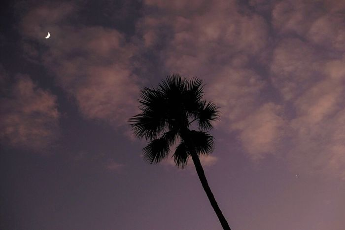 The Moon And Venus Palm Tree Low Angle View Sky Cloud - Sky Tree Nature Silhouette Tranquility No People Scenics Outdoors Tranquil Scene Beauty In Nature Day After Sunset 50mm F/5.6 🌙🌒🌙