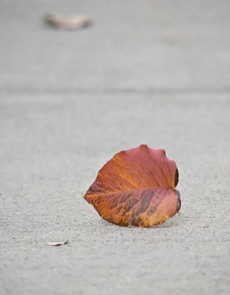 Moving forward with change Autumn Collection Falling Leaves Leafs Leaves Only Leaves Sidewalk Autumn Autumn Time Beauty In Nature Change Change Concepts And Images Change Of Seasons Close-up Fallen Leaves Future Keep Going Forward Leaf Leaf On The Ground Leaves Changing Colors Life Changes Moving Ahead Moving Forward On Path Life Journey Moving Forward With Changes Pavement Seasonal Photography Walking Path