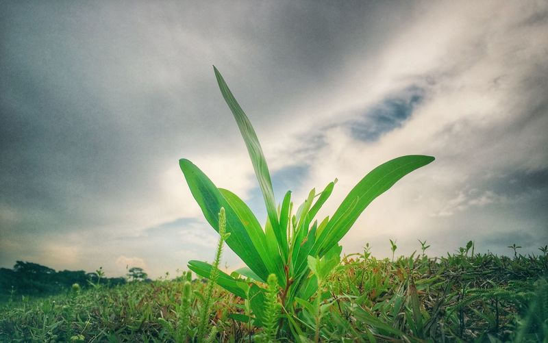 Livingplant Lowangle IPhone Photography Singapore